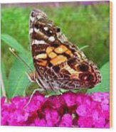 Fritillary Butterfly  Wood Print by Kim Galluzzo Wozniak