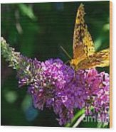 Fritillary Butterfly  Wood Print