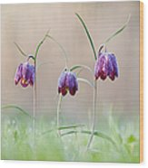 Fritillary Morning Wood Print