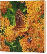 Fritillary On Butterfly Weed Wood Print