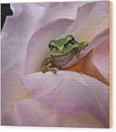 Frog And Rose Photo 1 Wood Print