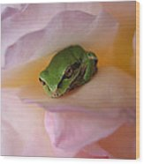 Frog And Rose Photo 2 Wood Print