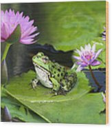 Frog And Water Lilies Wood Print