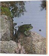 Frog At Edge Of Pond Wood Print