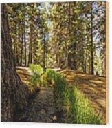 Frog Creek Wood Print