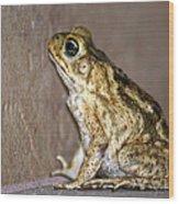 Frog-facing The Wall Wood Print by Miguel Hernandez