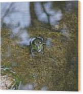 Frog In A Pond Wood Print