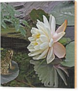 Frog In Awe Of White Water Lily Wood Print