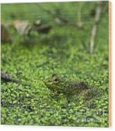 Frog In Swamp 2 Of 3 Wood Print
