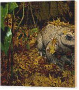 Frog In The Fall Wood Print