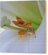 Frog In The Lily Wood Print