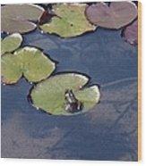Frog On A Lilypad Wood Print