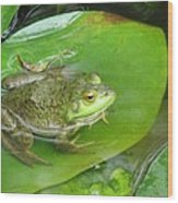 Frog On Lily Pad Photo Wood Print