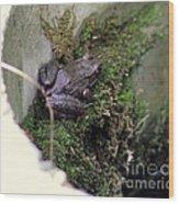 Frog On Moss On Wall Wood Print