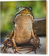 Frog Prince Or So He Thinks Wood Print