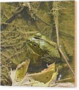 Frog Thinks He's Hidden Under A Twig Wood Print