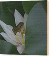 Frog Tucked In A Water Lily Wood Print