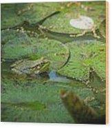 Froggy Bottom Wood Print