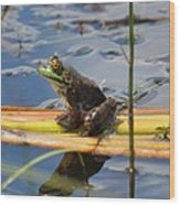 Froggy Reflections Wood Print