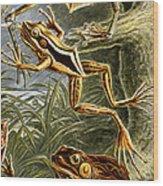 Frogs Detail Wood Print