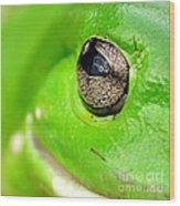 Frog's Eye Wood Print by Kaye Menner