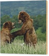 Frolicking Grizzly Bears Wood Print