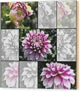 From Bud To Bloom - Dahlia Named Brian Ray Wood Print