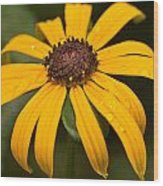 From Hal's Garden 06 Wood Print