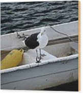 From Rockport Ma A Seagull Chilling Out In A Rowboat Wood Print