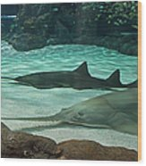 From The Deep - Sawtooth Ray Sharks Wood Print