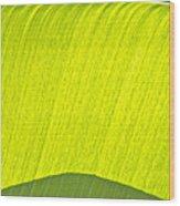 Fron Wood Print