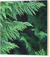 Fronds Of The Leyland Cypress Wood Print