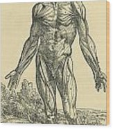 Front Of Male Human Body.anatomical Wood Print