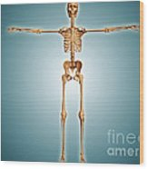 Front View Of Human Skeletal System Wood Print