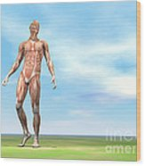 Front View Of Male Musculature Walking Wood Print