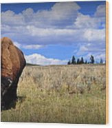 Frontview Of American Bison Wood Print