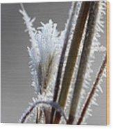 Frost 20131226-115 Wood Print
