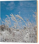 Frost Covered Grasses Against The Sky Wood Print