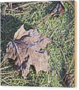 Frost Covered Leaf Wood Print