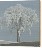 Frost Covered Lone Tree Wood Print
