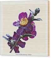 Frost On Camellia Sasanqua 'yuletide' Wood Print by Saxon Holt