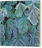 Frost On Francoa Sonchifolia Wood Print