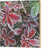 Frost On Wild Strawberry Wood Print