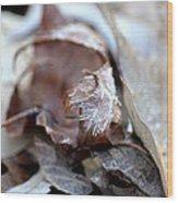 Frostcicles Wood Print