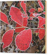 Frosted Blueberry Leaves Wood Print
