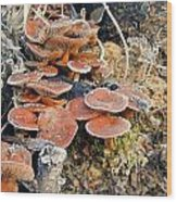 Frosted Cascading Mushrooms Wood Print