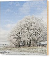 Frosted Copse Wood Print