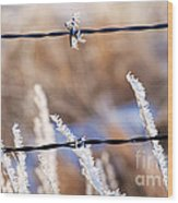 Frosted Fence Line Wood Print
