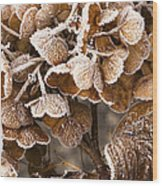 Frosted Hydrangea Wood Print