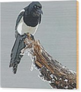Frosted Magpie- Abstract Wood Print